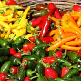 Chilli Chutney – Some Like It Hot