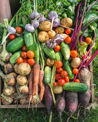 Get involved in the National Food Strategy